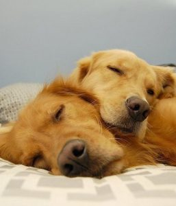 cute-dogs-sleeping-together-awww-photo
