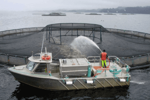 horrors of fish farming