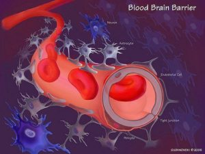 pharma gaba easily passes blood brain barrier
